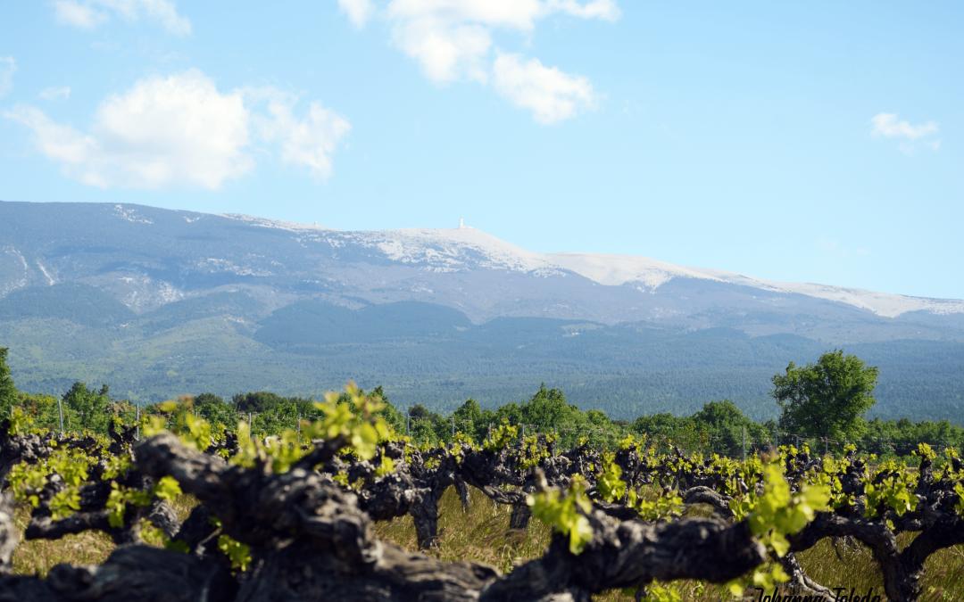 Les vins du Ventoux